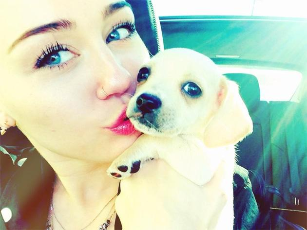 Celebrity Twitpics: Dog lover Miley Cyrus has a new pooch to add to her brood – and she naturally introduced him to Twitter. Copyright [Miley Cyrus]