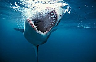 Your Killer Content Strategy Includes More Than Just Killer Content image scary shark 600x389