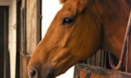 Horsemeat Scandal: Romania Angered By Blame