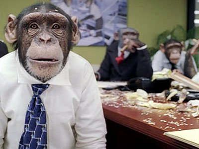 career chimp