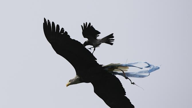 Lazio's mascot eagle Olimpia is attacked by a crow as it flies before the start of their Serie A soccer match against Chievo Verona at the Olympic stadium in Rome