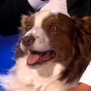 Watch the moment Jules O'Dwyer and Matisse the dog won Britain's Got Talent 2015