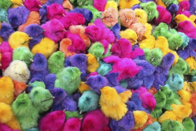 Pulcini colorati for Regalo roba usata