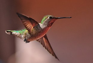 Hummingbird & Other Updates Show Google is Gearing Up image hummingbird2