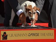 "Uggie, the dog who starred in the Oscar-winning film ""The Artist"", gets help pressing his paw into cement as he is honored with a hand-and-paw print ceremony on June 25 outside Grauman's Chinese Theatre in Hollywood. The ceremony marked Uggie's retirement from acting"