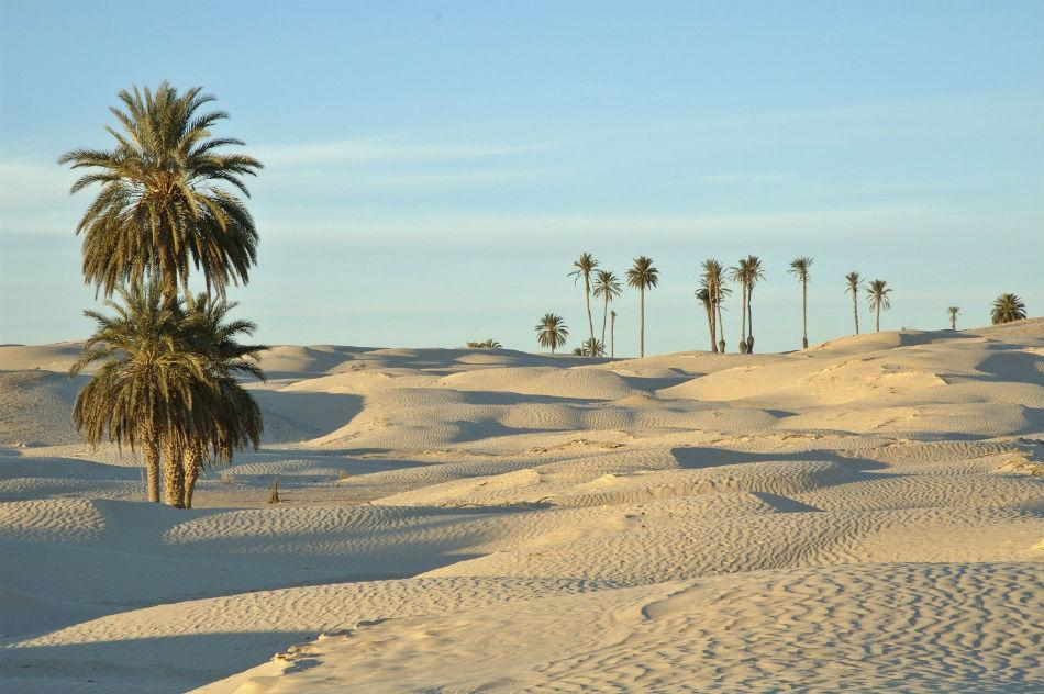 Tunisia is located on the edge of North Africa and is lined with the stunning Mediterranean coastline. Take a look at an oasis in Tunisia desert.