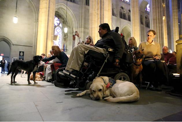 Churchgoers with their pets attend the 31st annual Feast of Saint Francis and Blessing of the Animals at The Cathedral of St. John the Divine in the Manhattan borough of New York