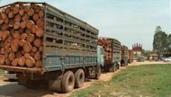 This file photo shows trucks loaded with 'unprocessed' timber, waiting at a Cambodian border crossing with Vietnam. A Cambodian journalist who reported on rampant illegal logging in the country has been found murdered in the boot of his car, police said on Wednesday