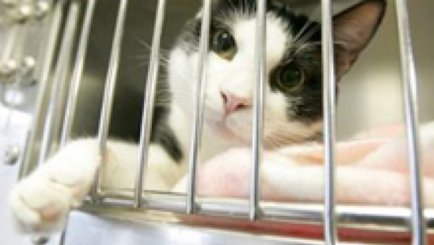 Deadly cat disease outbreak in Saskatoon: SPCA