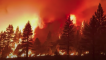 Evacuations as Tamarack Fire in California Grows to 21,000 Acres
