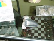 This image shows a fossilized Tarbosaurus bataar tooth for sale in a Mongolian museum, according to attorneys for fossil dealer Eric Prokopi. Mongolian law makes fossils found within its borders state property, and Prokopi's legal team maintain