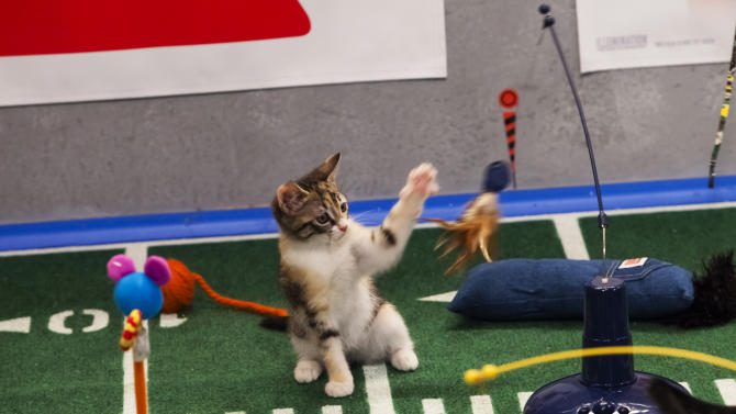"""File-This undated publicity file photo provided by Animal Planet shows the Kitty half time show during """"Puppy Bowl IX,"""" in New York. The inaugural Kitten Bowl will be shown on the Hallmark Channel. The show is part of Hallmark's Pet Project Initiative and will be done with partner American Humane Association. (AP Photo/Animal Planet, Keith Barraclough,File)"""