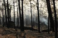 Burnt trees from the Deans Gap bushfire near Nowra in the Australian state of New South Wales are pictured on January 9, 2013. Australian firefighters were racing against the clock to bring a series of blazes under control Thursday before a forecast spike in temperatures brings the risk of more infernos