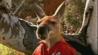 Kangaroo Jack Scene: Jack Checks The Pockets