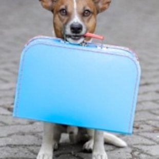 Comforts from home will help your pup adjust to boarding