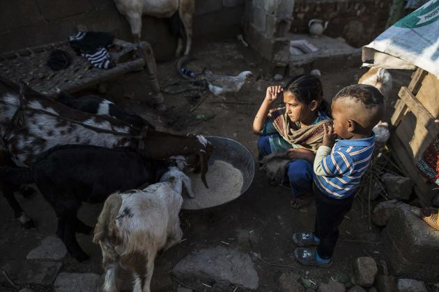 A girl feeds goats along her house's corridor at a slum on the outskirts of Islamabad