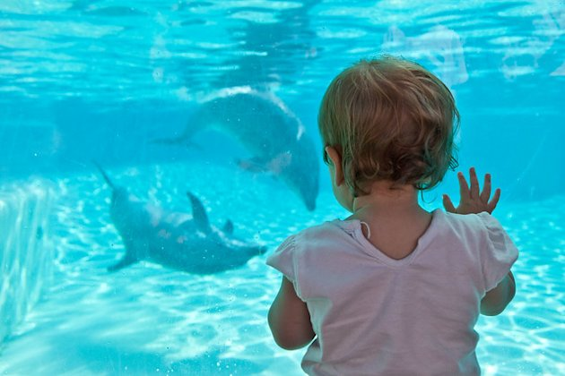 Touching The Blue Beyond (Jessica with Bottlenose Dolphins), Sea World San Diego