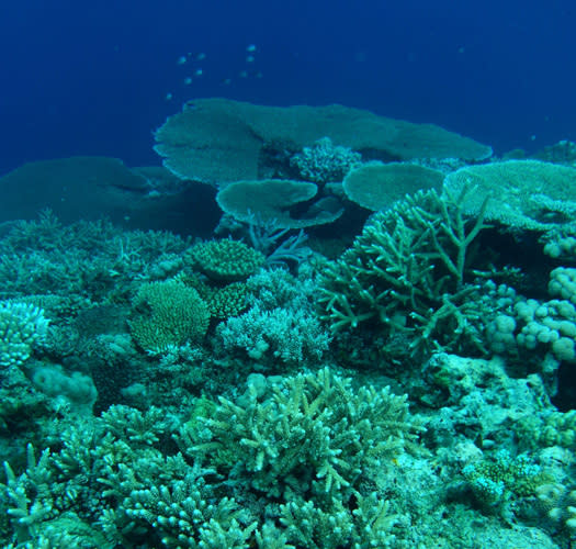 Fluorescence Could Indicate Health of Corals
