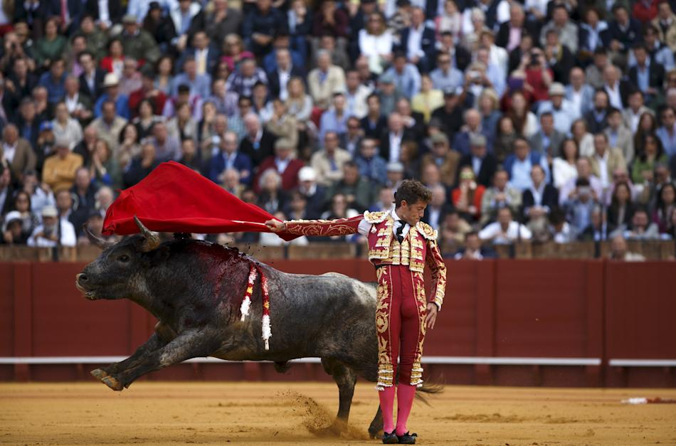 Spanish matador Manuel Escribano performs a back-pass to a bull during a bullfight in Seville, southern Spain