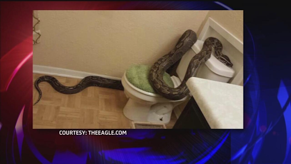 how to work a toilet snake