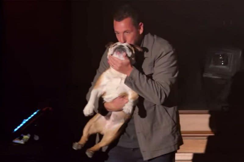 <p>七、亞當山德勒(Hugh Jackman):好萊塢喜劇男星亞當山德勒是圈內出了名的法國鬥牛犬愛好者,在自己主演的《魔鬼接班人》中也欽點要與法國鬥牛犬一同登場亮相。他一共養了兩隻法國鬥牛犬,其中一隻還在亞當山德勒的婚禮上擔任狗伴郎,可見亞當山德勒對愛犬的重視,另一隻法國鬥牛犬則是在婚後才領養。(圖:Yahoo US) </p>
