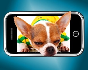Mobile Phone: Man's New Best Friend? image chihuahua phone