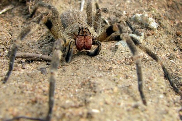 British woman finds eggs of the world's most poisonous spider in her shopping