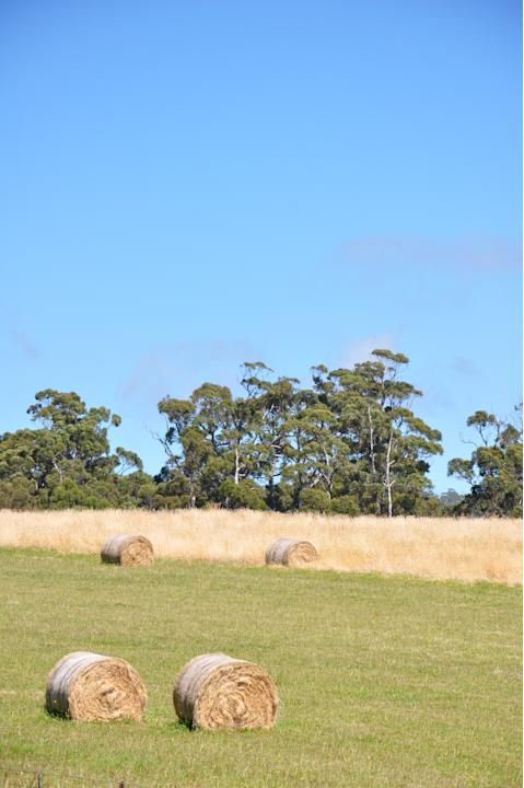 As with the rest of Australia, farming and agriculture is a big part of the lives of Tasmanians. For the tourist, it means lovely scenes of fields dotted with sheep and bales of hay.