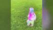 視覺特效藝術家 幫兒子製作超科幻影片