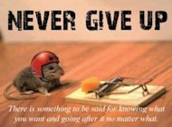 8 Marketing Quotes To Instantly Inspire You! image never give up little guy 300x2221