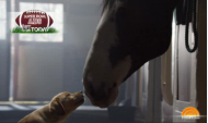 Does Budweiser Have Puppy Love for its Marketing Agency? image Screen Shot 2014 01 29 at 9.31.34 AM