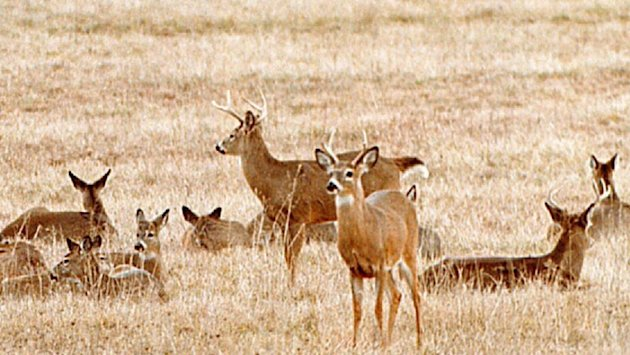 Nuisance deer have some Nova Scotia farmers fed up