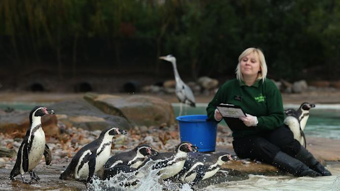London zoo counting day