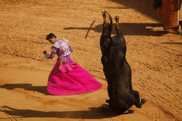 "A bull does a somersault after getting its horns stuck in the sand after Spanish bullfighter 'Paquirri' performed a pass during the ""Corrida Goyesca"" bullfight in Ronda"