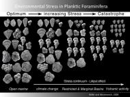 Fossils in India revealed that plankton species became smaller, with less elaborate shells, suggesting that sulfur and carbon dioxide from volcanism caused ocean acidification and led to a mass die-off in the seas.
