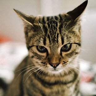 Your cat may be apathetic towards you, according to a new study