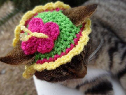 Spring Is in the Air...and on Your Cat's Head