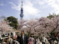People stroll under fully bloomed cherry blossoms in a park in Tokyo. Japan's current account surplus fell 8.6% in March from a year earlier as higher energy costs pushed up import bills, official data showed Thursday