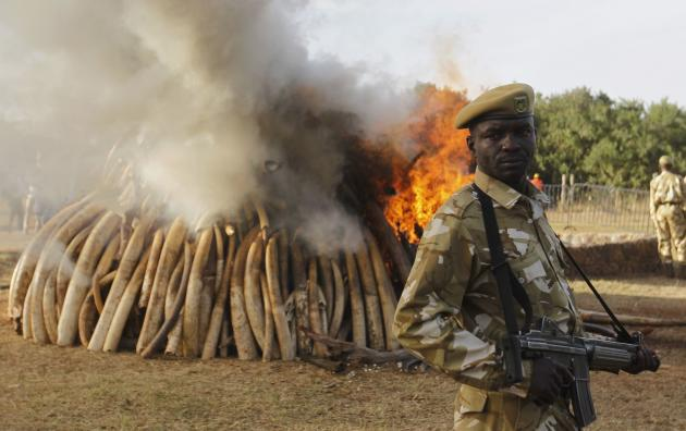 A Kenya Wildlife Service ranger stands guard as 15 tonnes of ivory confiscated from smugglers and poachers is burnt to mark World Wildlife Day at the Nairobi National Park