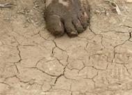 A farmer's mud-covered foot is seen in a field in Langfang, Hebei province, about 80 km (50 miles) from Beijing, May 24, 2013. REUTERS/Kim Kyung-Hoon/Files