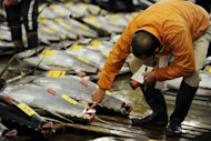 A fishmonger checking bluefin tuna at Tokyo's Tsukiji fish market in January 2012. Bluefin tuna may have transported radioactive material from Japan's quake-struck Fukushima nuclear plant across the Pacific Ocean to US shores, a study has found