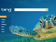 3 Tips for Optimizing for Bing Before 2014 image bing seaturtle 300x225