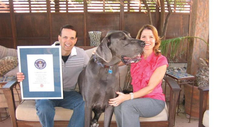 Giant George: Great Dane Is Guinness World Record Holder ...