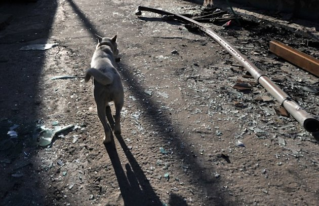 File picture shows a dog walking along a street on South Korea's Yeonpyeong island on November 25, 2010. A South Korean animal rights group offered a $2,800 dollar reward Wednesday to catch those responsible for setting a dog on fire in an incident that triggered a public outcry