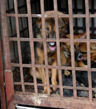 Dogs sit in cages waiting to be slaughtered in Hanoi. Dog meat is good for health and virility, believes some dog owners. They see no contradiction between these monthly meat binges and owning a dog