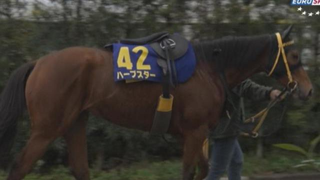 Horse Racing Time: Japan Cup