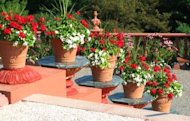 Container gardening makes it easy to invite spring into your garden, patio or porch.