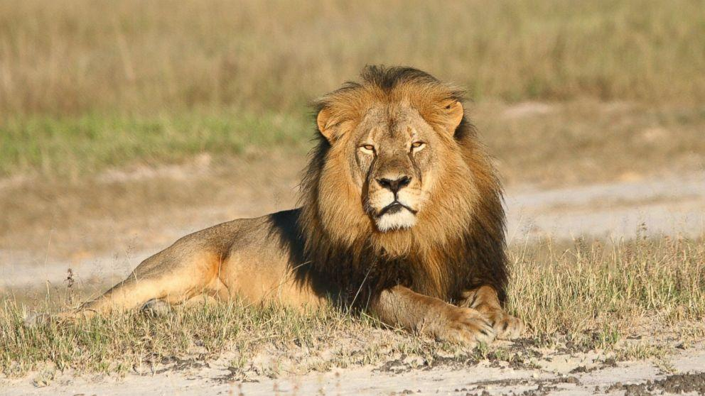 Cecil the Lion's Brother, Jericho, Shot and Killed by Hunter in Zimbabwe