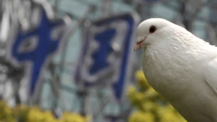 "A dove rests on a tree near a Chinese sign read as ""China"" at a park on Monday, April 1, 2013 in Shanghai, China. Two Shanghai men have died from a lesser-known type of bird flu in the first known human deaths from the strain, and Chinese authorities said Sunday it wasn't clear how they were infected but there was no evidence of human-to-human transmission. (AP Photo/Eugene Hoshiko)"
