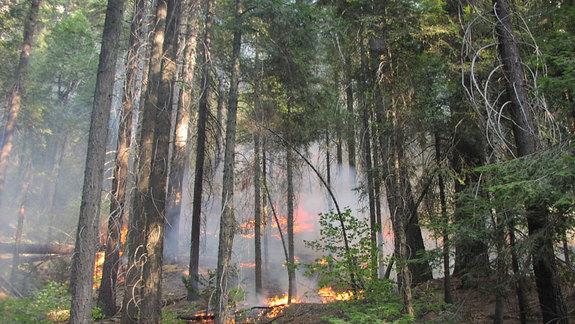 Drought-Weakened Trees More Likely to Die in Fires